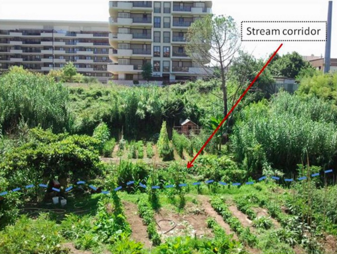 South Rome CIty Farm 2