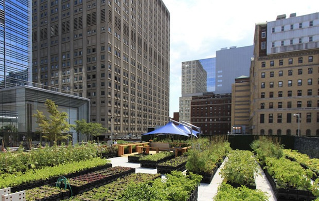 Urban Rooftop Farming cover image